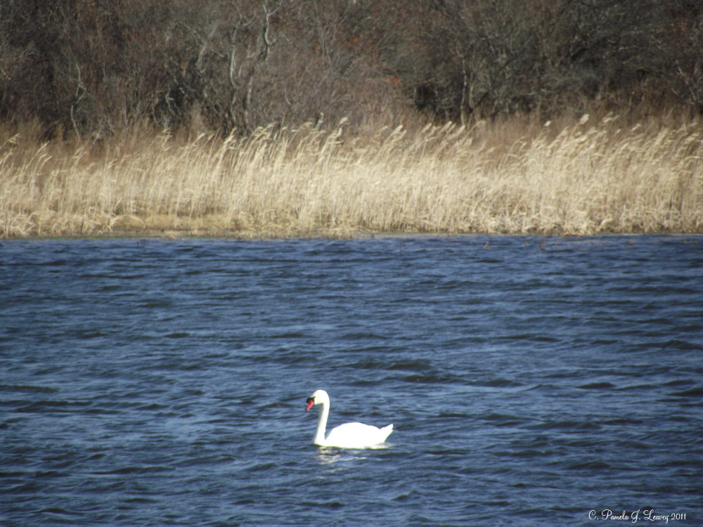 swan12-16-11