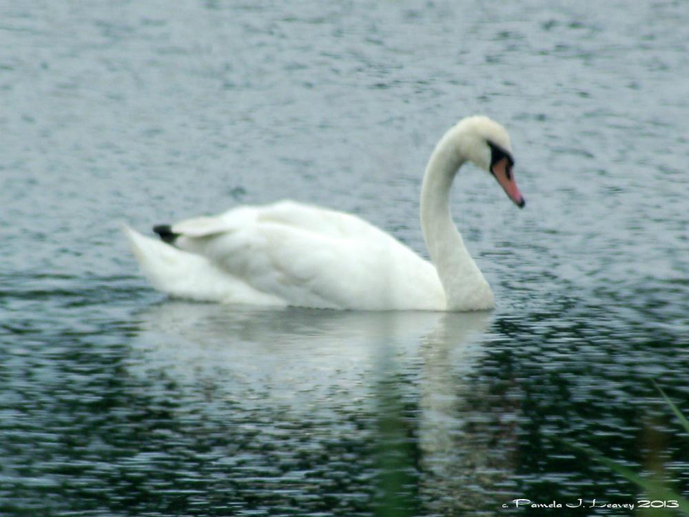 swanstagepool