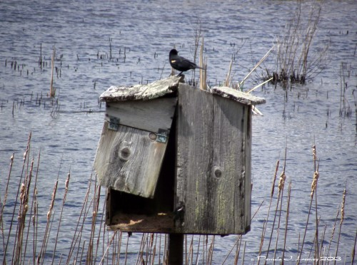 birdhouseathellcat3