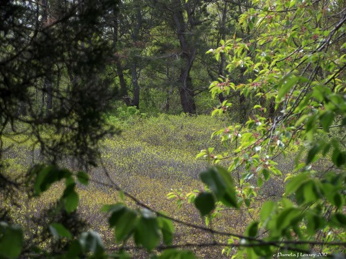 Hellcat Swamp