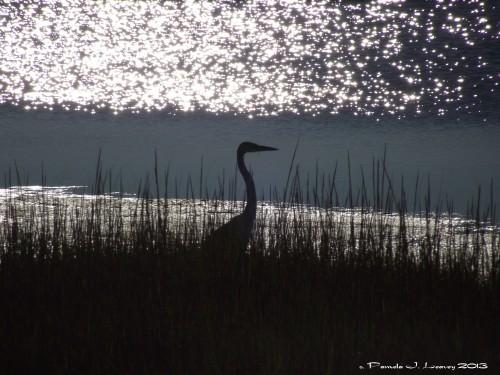 Silhouette Heron in the Salt Marsh ~ c. Pamela J. Leavey 2013