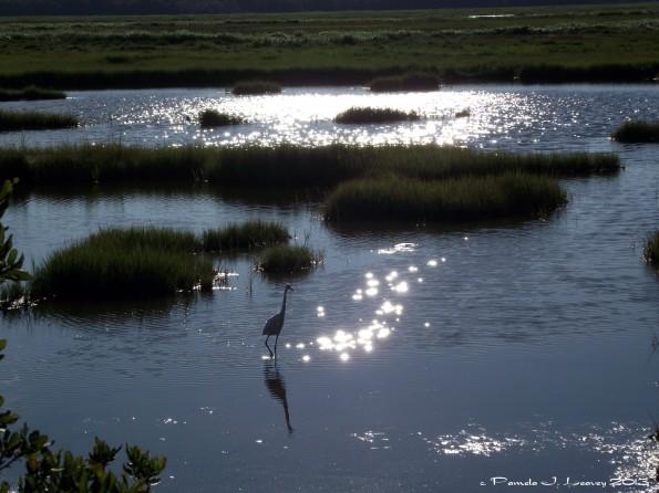 sparkling water egret