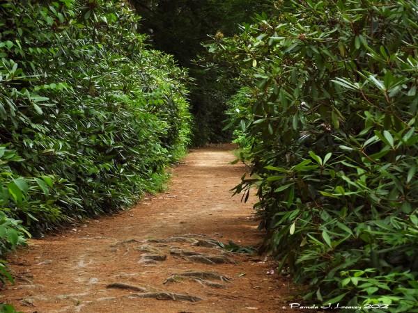 maudslay trail