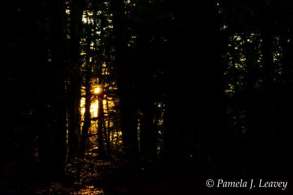 Rays of Golden Light Through the Trees Shackford Head Eastport, ME