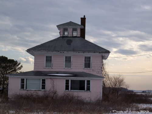 Red Tail Hawk on Pink House Chimney  ~ c. Pamela J. Leavey