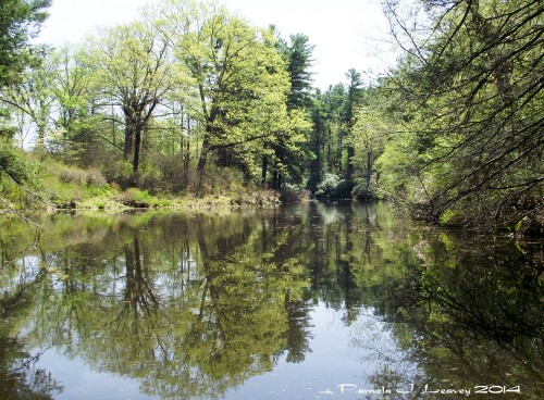 Reflection at Maudslay ~ c. Pamela J. Leavey 2014