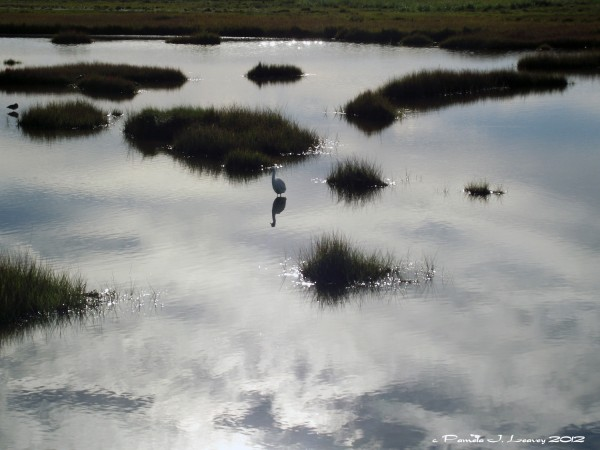 reflection with egret