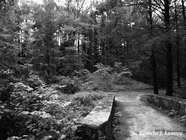Maudslay Trail 2