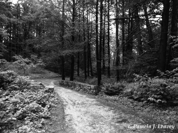 Maudslay Trail